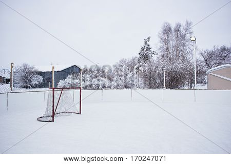 An outdoor hockey rink with one net surrounded by frost covered trees in a white winter