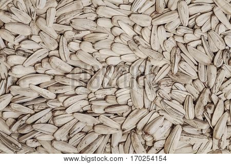 sunflower white seeds in the husk closeup