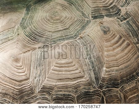 Turtle shell close-up texture. Abystract natural shapes.