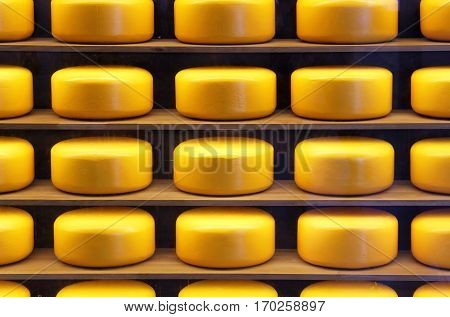 Yellow heads of cheese in the store