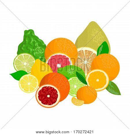 Juicy citrus fruits realistic with slices and leaves. Bergamot, lemon, grapefruit, lime, mandarin, pomelo, blood orange. For cosmetics, fresh bar, store, bio products For design tag label menu