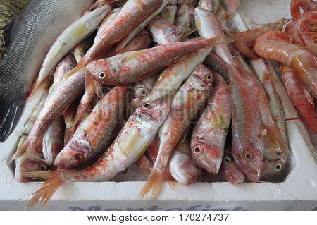 Surmullet from Adriatic sea. Fish market in Bar, Montenegro.