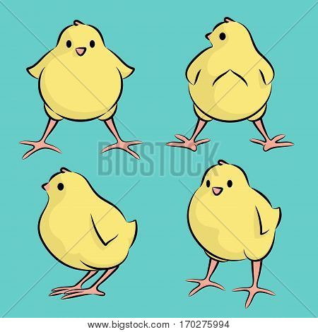 Vector Illustration Of A Baby Chicken From Four Angles