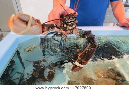 Big lobster (omar) from Adriatic sea in the fish shop in Bar-city, Montenegro.