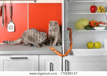 Cute cats stealing sausages in kitchen