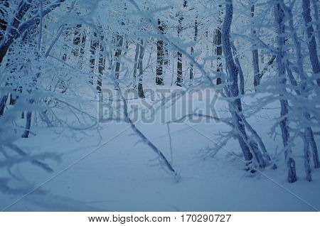 Winter In The Italian Appennines