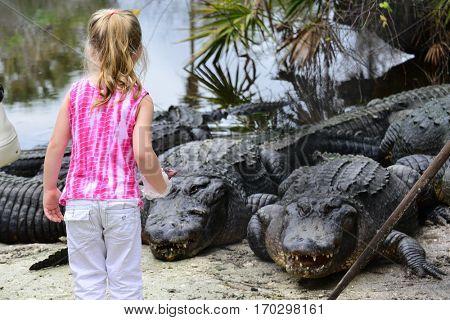 Little girl feeds alligators