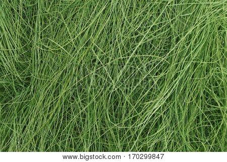 Long deep green grass