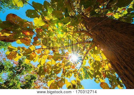 treetops in the autumn forest. photographed on a fisheye lens. focus on the tops of trees