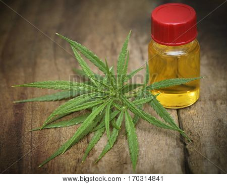 Medicinal cannabis leaves with extract oil in a bottle