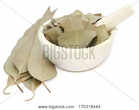 Closeup of Dry Eucalyptus leaves over white background
