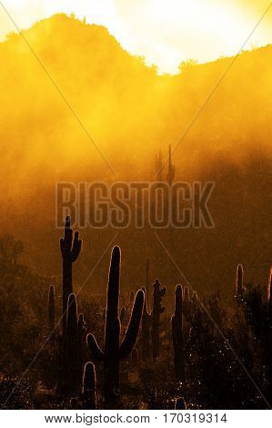 Misty morning in desert with cactus cacti in Arizona wilderness with raindrops