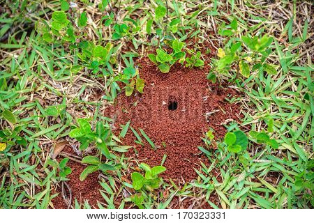 Small anthill with a hole on the ground with little plants and green grass around it at summer sunny day