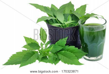 Medicinal Vitex Negundo with extract in a glass