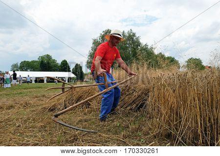 TRNOVEC, CROATIA - JULY 09, 2016: Farmer harvesting wheat with scythe in wheat fields in Trnovec, Croatia on July 09, 2016.