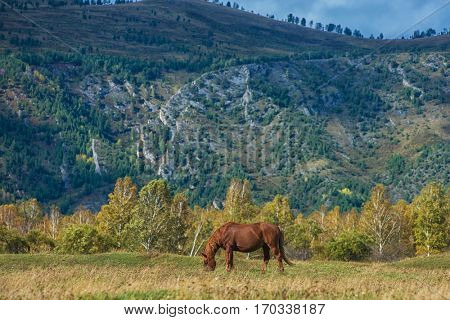 Horses in mountain ranch, Altay Russia