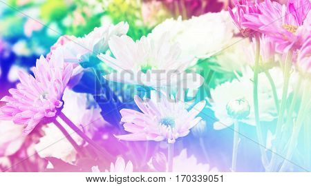Close up flowers background at market flower