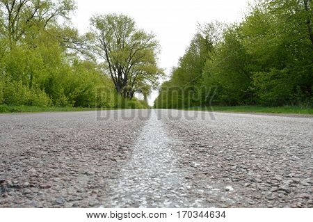 Center of the straight asphalt road among the trees