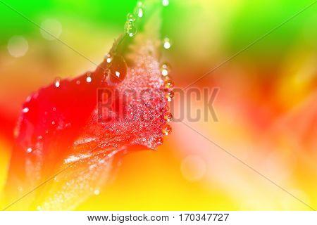 Fresh leaf with dew drops close up