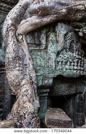 Ta Prohm temple with giant banyan tree.
