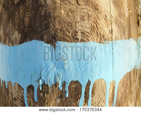 Painted wooden background. Streaks of blue paint on wood. Surface of old wood. Paint over with blue. Smudges of blue paint on the tree trunk.