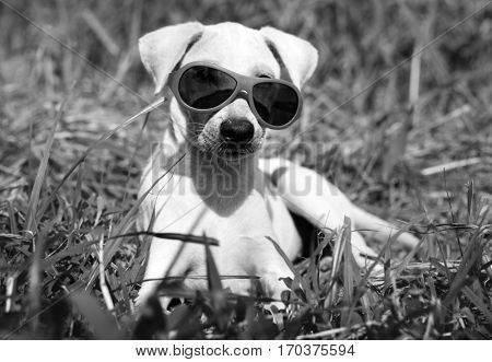 Dog Sunglasses Canine Breed Pet Greeting