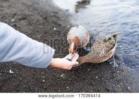 Woman feeding duck at lake side
