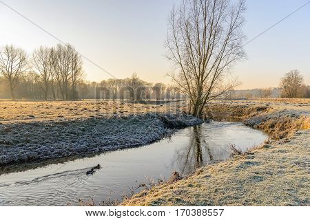 Picturesque rural winter landscape with a thin layer of snow and hoarfrost and a stream with swimming mallards in low early morning sunlight.