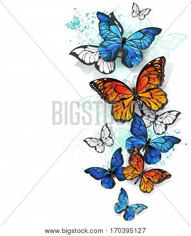 Flying bright blue butterfly morpho and orange monarch butterfly on a white background. Morpho. Monarch butterfly. Design with butterflies.