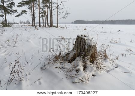Winter landscape with old stump on the foreground. Peno lake Tver oblast Russia.
