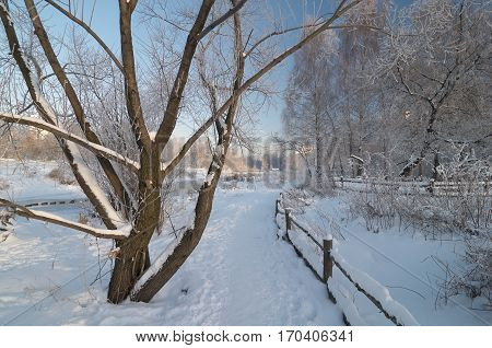 On the pathway in winter park near Yauza river in Moscow. Branches of the trees are covered by hoarfrost.
