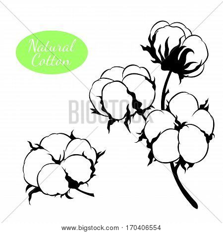 Black and white vector cotton flowers. Can be used as decor ellement for a rustic wedding, greeting cards, textile or prints.