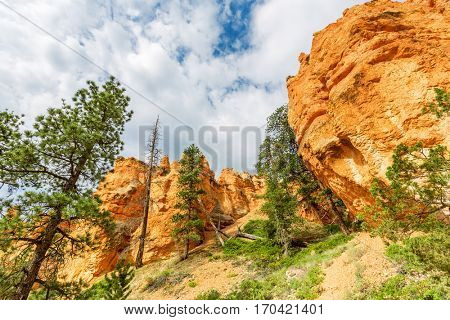 Pine Tree forest at Bryce Canyon National Park