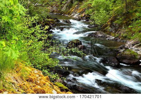 Running water in Mount Rainier national park