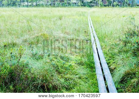 Board walk trough high grass in swamp