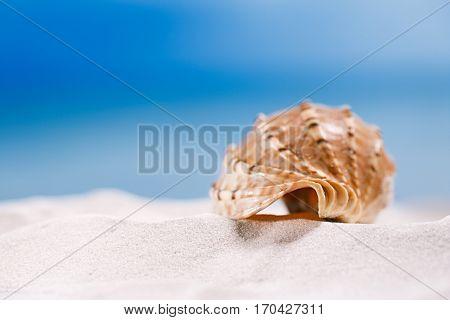 tropical seashell sea shell with ocean , beach and seascape, shallow dof