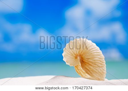 paper nautilus shell  on white beach  sand and blue seascape background