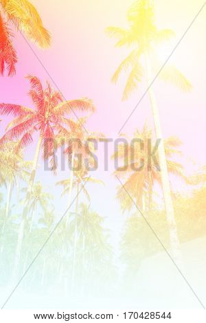 Coconut plam tree and blue sky background