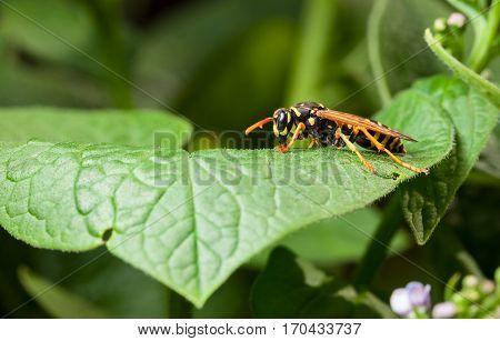 Wasp Profile
