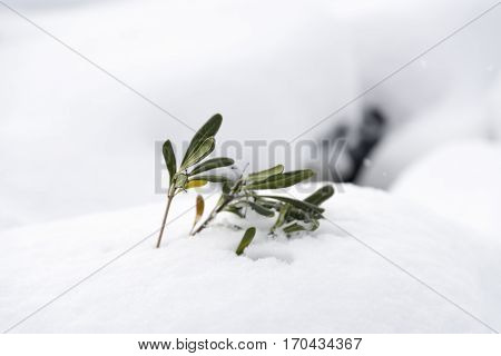 Close Up Shot Of A Plant Covered With Snow