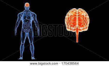 3d illustration human body brain of a human body organ