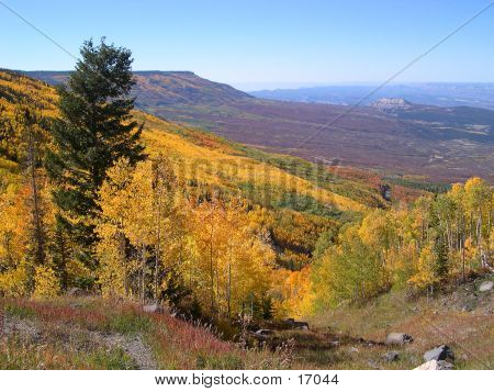 Path Through Early Autumn Trees