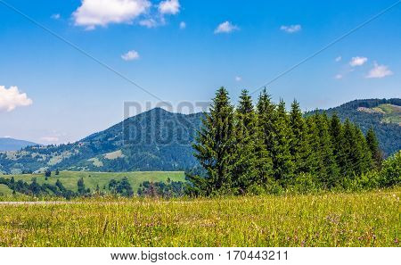 Spruce Forest On A Mountain Hill Side