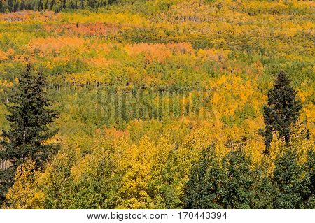 a scenic fall landscape in the Colorado rocky mountains
