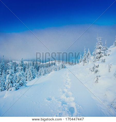 Fantastic winter landscape and trodden trails that lead into the mountains. In anticipation of the holiday. Carpathian, Ukraine, Europe.