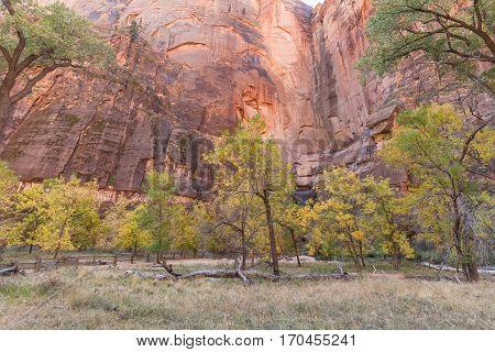 a beautiful autumn landscape in Zion National Park Utah