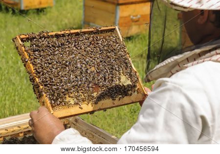 Beekeeper inspects bee family. Cell bees. Beekeeping