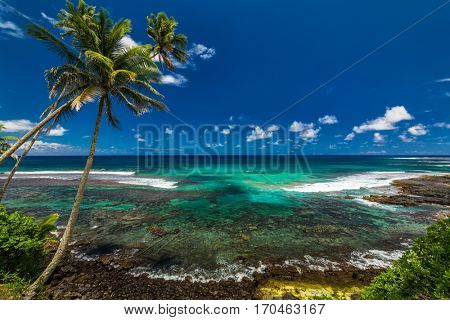Tropical volcanic beach on Samoa Island with many palm trees, South Pacific