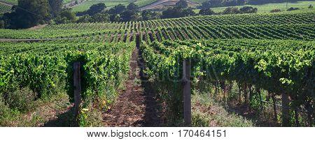 Napa is wine growing region of Northern California
