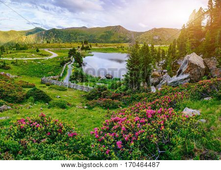 Glade with flowers near the water in the mountains